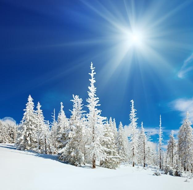 Wintersneeuw bedekte sparren op berghelling op blauwe lucht met zon glans achtergrond