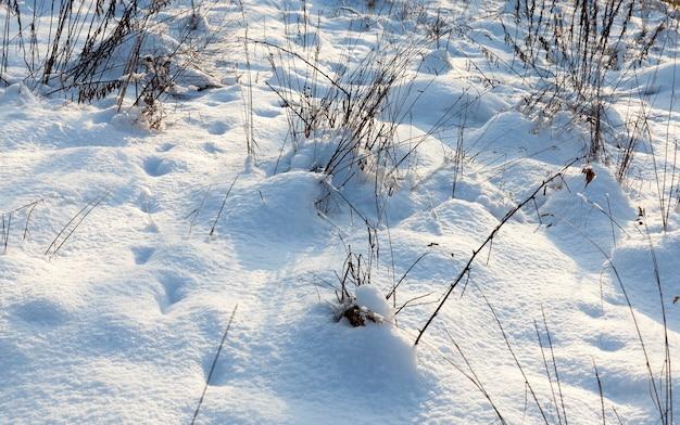 Wintersneeuw en gras