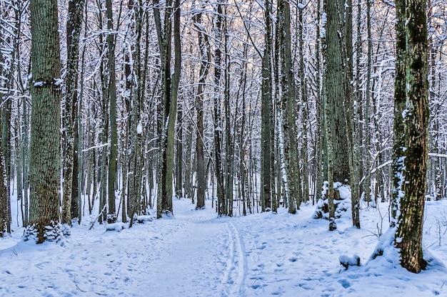 Wintersteeg tussen de bevroren bomen