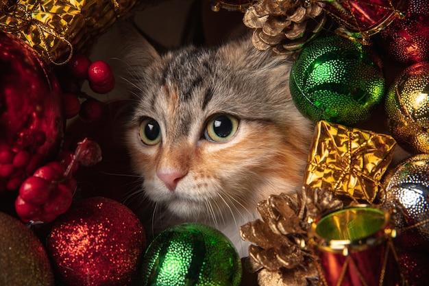 Winterstemming. mooie kitten van siberische kat, zittend op de bank in nieuwjaar decoratie.