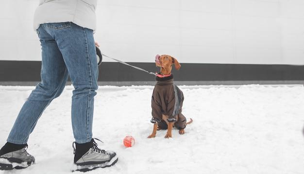 Winterwandeling met hond. meisje en een hond die een hondjejurk dragen in de sneeuwwinter