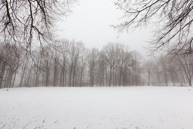 Winterweer in het park of bos en loofbomen, ijzige winter na sneeuwval met kale loofbomen, loofbomen in de winter