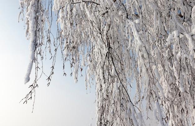 Winterweer in het park of bos en loofbomen