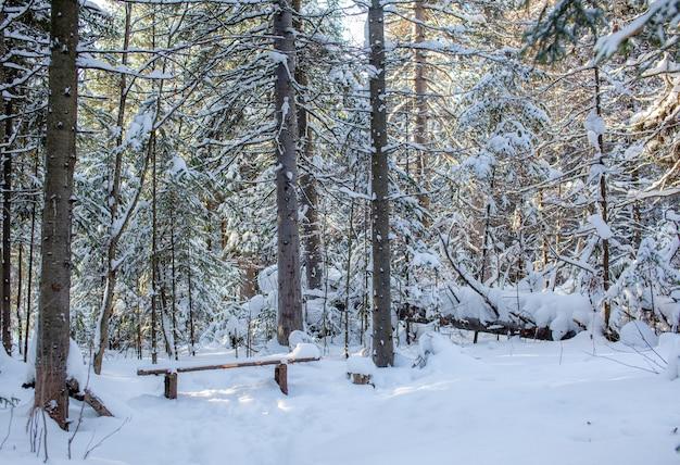 Winterweg in een met sneeuw bedekt bos, hoge bomen langs de weg.