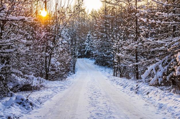 Winterweg in het bos