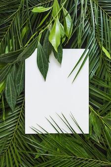 Wit blanco papier op de achtergrond verse groene bladeren