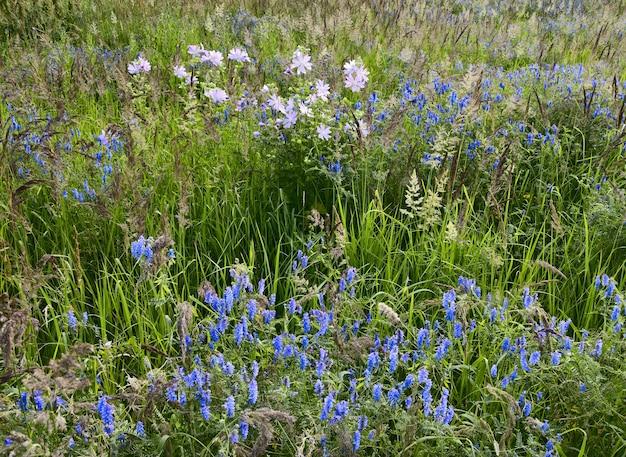 Wit blauw lila wilde bloemen op een groene weide in dik gras natuur van siberië