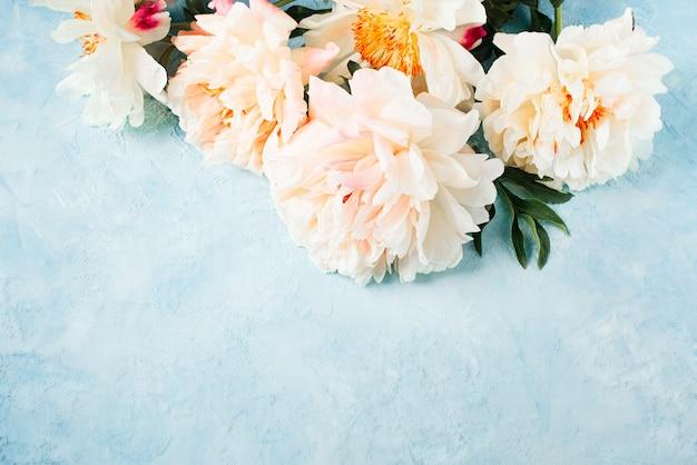 Wit en roze pioenframe op blauwe achtergrond, exemplaarruimte
