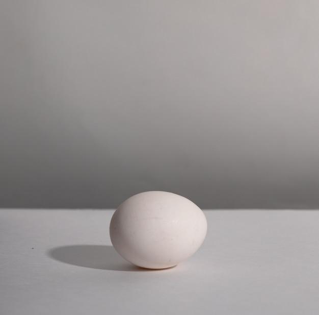 Wit enkel dierlijk ei. kippenei met zachte schaduwen op witte achtergrond.