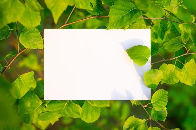 Wit geïsoleerd papier op berk tegen ondergaande zon