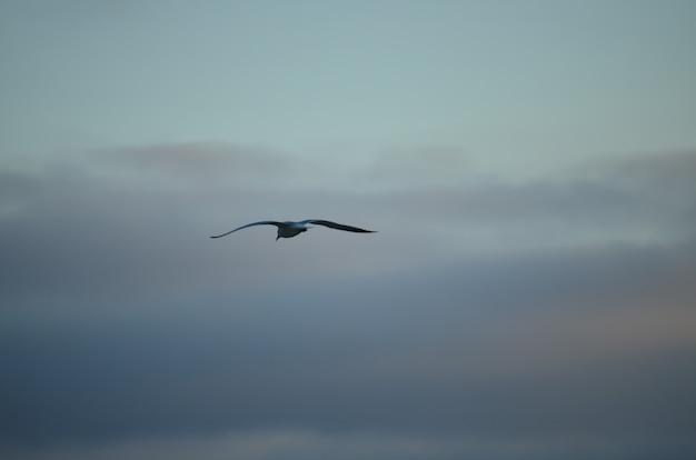 Wit geïsoleerde zeemeeuw op een blauwe hemelachtergrond