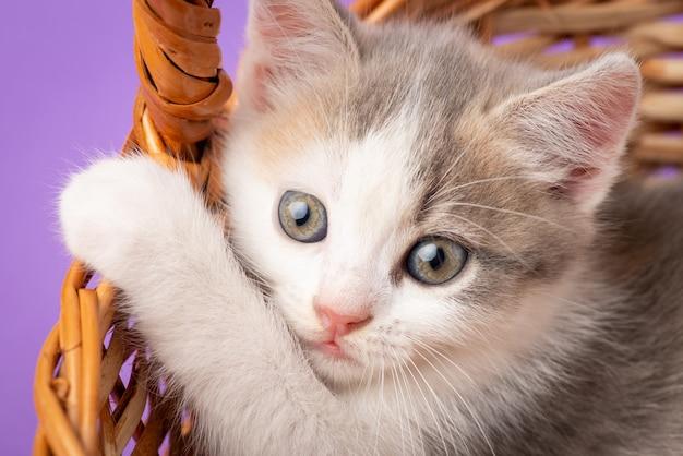 Wit katje dat ergens bang kijkt. mooie kat spelen in een mand