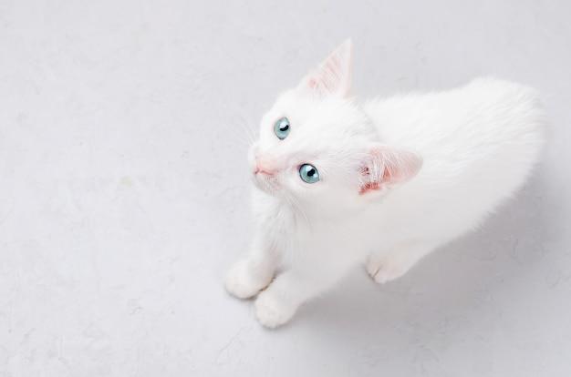 Wit katje op een witte achtergrond