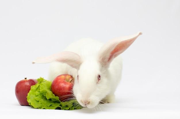 Wit konijn en appel geïsoleerd op een witte achtergrond.