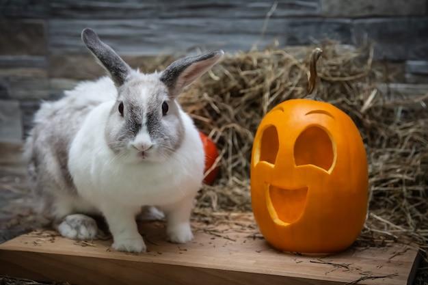 Wit konijn en geel pompoenhalloween-symbool op een houten plank van een stenen muur