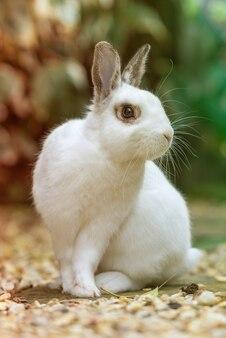 Wit konijn in de tuin die zijdelings kijkt.