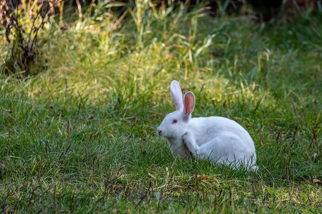 Wit konijn loopt op een groene weide