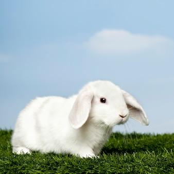 Wit konijn op gras tegen blauwe hemel