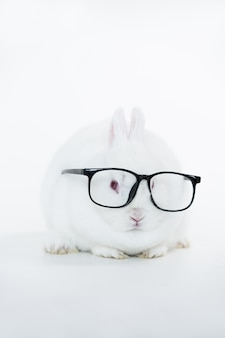 Wit konijntje dat menselijke glazen draagt