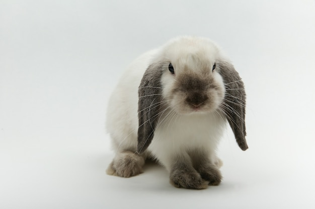 Wit konijntje dat op wit wordt geïsoleerd