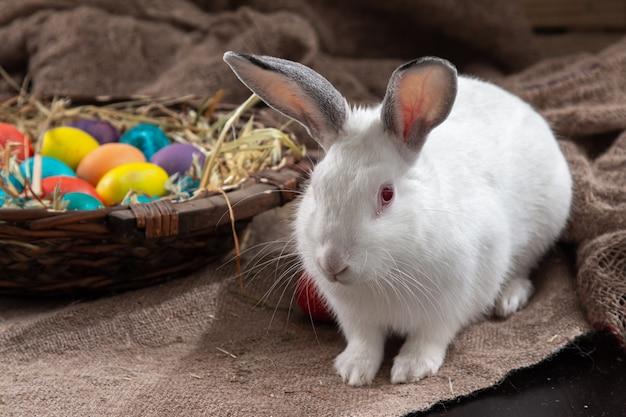 Wit konijntje met mandje met gekleurde eieren op de achtergrond van jutepasen.