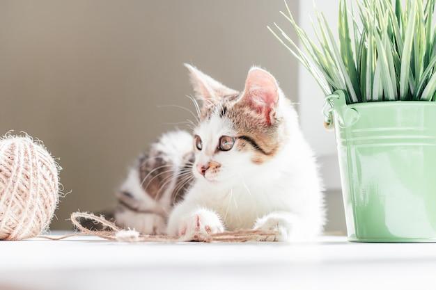 Wit met grijze strepen kat 3-4 maanden speelt met streng jute touw naast bal en kamerplant. speelse kitten zonder ras