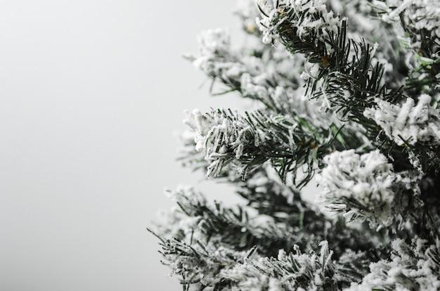 Wit met vuren groene dennentakken en sneeuw.