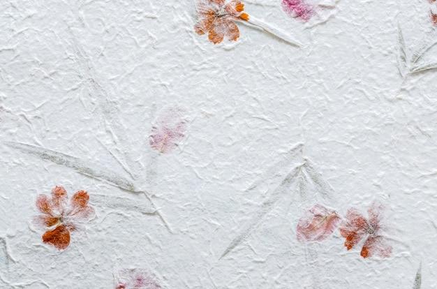 Wit moerbeiboomdocument met bloemblaadje en bladtextuurachtergrond.