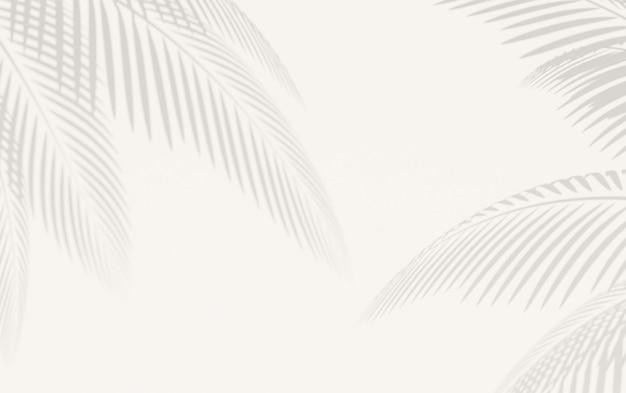 Wit oppervlak met gedefinieerde schaduw van palmbladeren