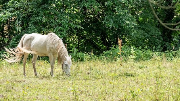 Wit paard dat in weiland weidt