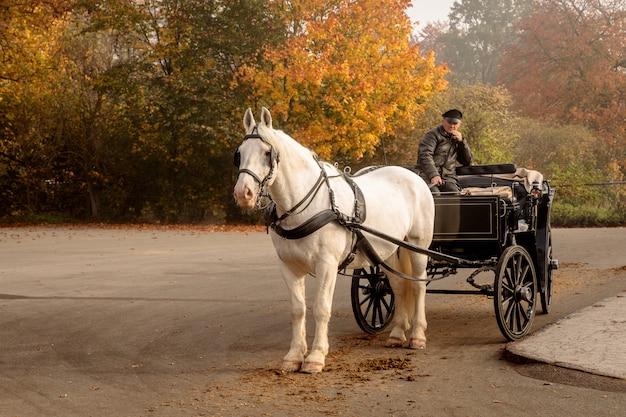 Wit paard met koets, wachtend op enkele toeristen buiten de rode poort naar jaegersborg dyrehave dicht bij kopenhagen.