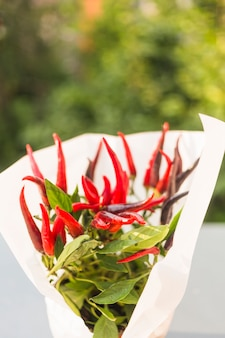 Wit papier gewikkeld rond rode pepers