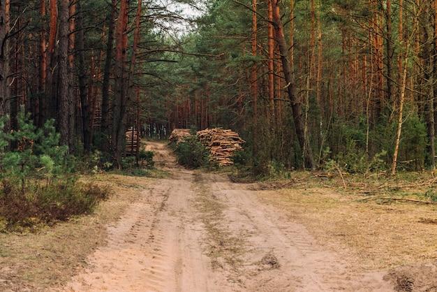 Wit-russische boslandschap in het voorjaar. republiek wit-rusland. kappen van bos.