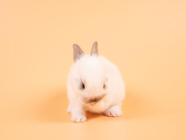 Wit schattig baby konijn op gele achtergrond. schattige baby konijn.