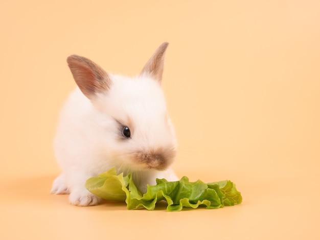 Wit schattig babykonijn dat kool op gele achtergrond eet. schattige baby konijn.