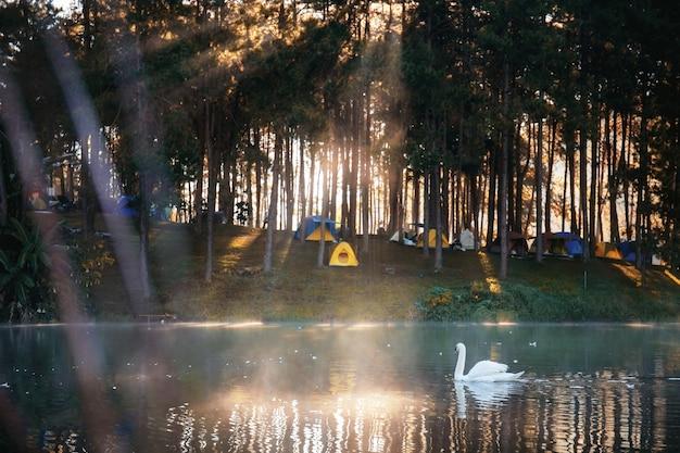 Wit van zwaan op meer bij zonsopgang.