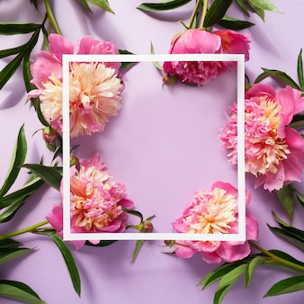 Wit vierkant kader met roze pioenen op purpere achtergrond