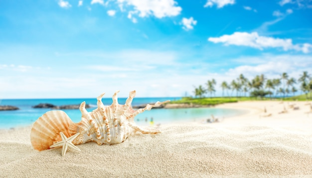 Wit zand en schelpen op het strand, zomervakantie