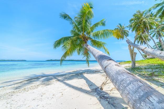 Wit zandstrand met turkoois blauw het waterkoraalrif van kokosnotenpalmen