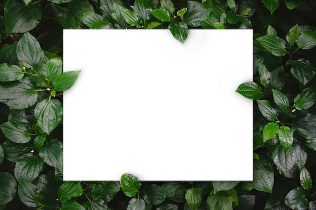 Witboek over groene bladeren textuur bovenaanzicht achtergrond creatieve lay-out in de natuur concept