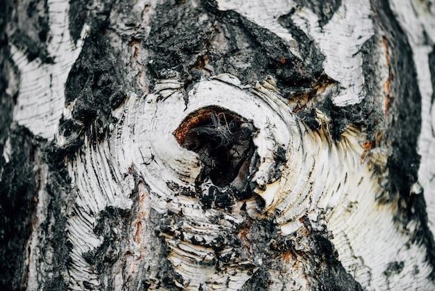 Witte aardachtergrond van berkeschorsclose-up. vliegtuig van berken boomstam oppervlak. boom getextureerde achtergrond. gedetailleerde natuurlijke textuur van de stam van de berkboom. abstracte achtergrond.