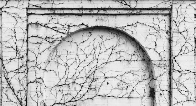 Witte bakstenen muur met een boog begroeid met klimplanten, zwart witte foto