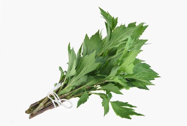 Witte bijvoet plant (artemisia lactiflora) geïsoleerd op wit