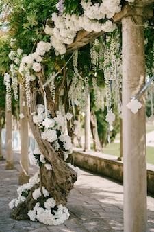 Witte blauweregen met grote bloemtrossen op de dwarsbalken bij de kolommen.