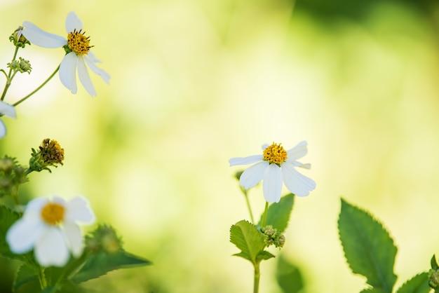Witte bloem achtergrond
