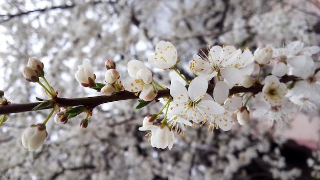 Witte bloem bloeien op de boom