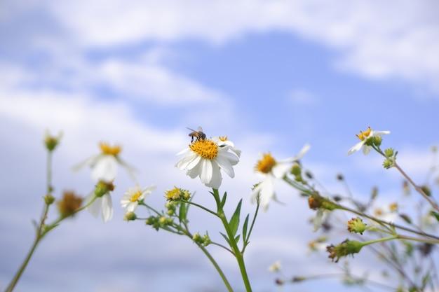 Witte bloem in aard tegen blauwe hemel