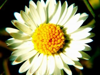 Witte bloem, zon