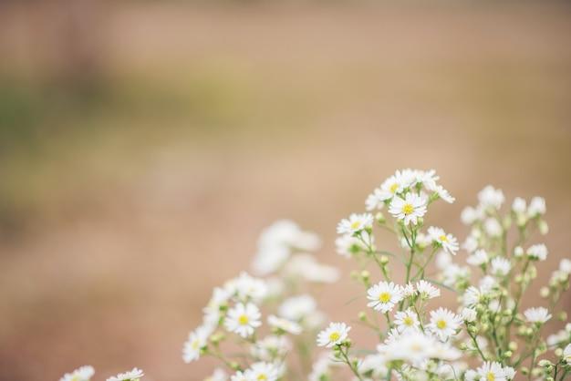 Witte bloemachtergrond
