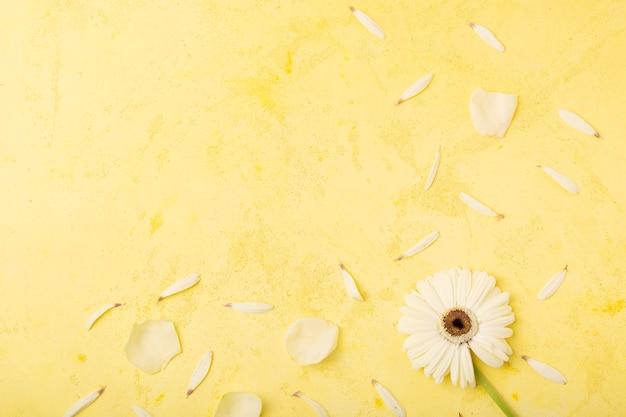 Witte bloemblaadjes met gele exemplaar ruimteachtergrond